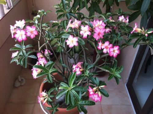 Комнатные растения и цветы iplants ru